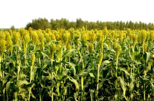 一旦中心给钱农民就可以获得农作物保险费