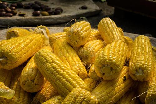 由于需求强劲 印度的玉米进口量可能攀升至历史新高