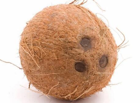 每个人都认为新的iPhone 11 Pro看起来像椰子