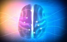 神经科技的掌纹识别算法在FVC-onGoing上进行测试