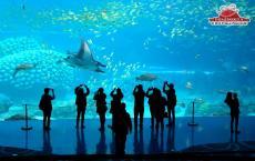 中国巨型水族馆创下五项吉尼斯世界纪录
