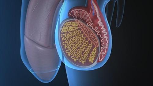 医疗人员通过机器学习预测睾丸癌的副作用