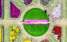 南京水乡之旅 | 绝了!这里的菊花 火上央视!