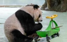 去动物园散步才是正经事!一起去汤山紫清湖看国宝啦